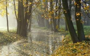 Картинка осень, листья, природа, туман, парк