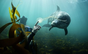 Картинка водоросли, дельфин, Океан, аквалангист, медуза.