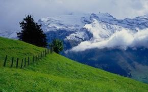 Картинка зелень, небо, горы, луг
