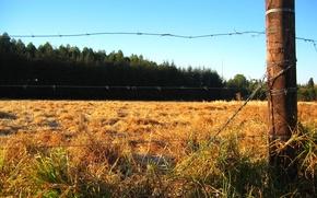 Обои поле, лес, забор