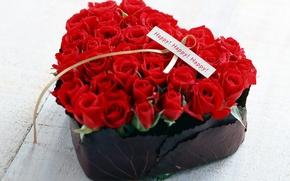 Обои цветок, красный, розы