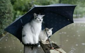 Обои осень, дождь, зонт