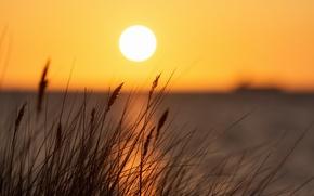 Картинка вода, закат, озеро, отражение, стебли, горизонт, островок, sunset, water, lake, reflection, horizon, stalks, islet, plant ...