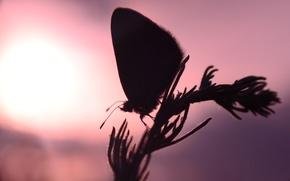 Картинка солнце, закат, бабочка
