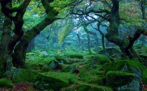 Картинка лес, природа, камни, мох, дымка