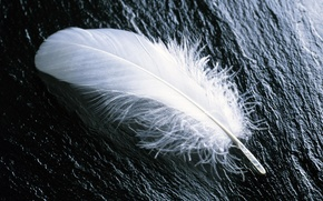 Картинка перо, белое, на камне