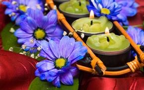 Картинка цветок, романтика, свечи, атлас, синие хризантемы