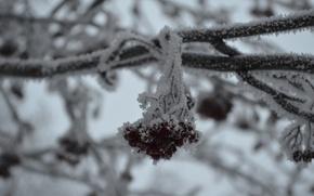 Картинка зима, иней, мороз, рябина