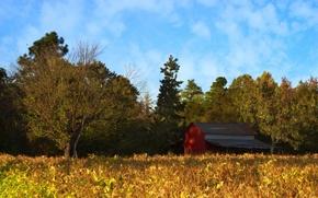 Картинка осень, лес, небо, облака, деревья, дом, поляна, сарай