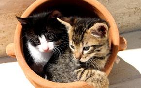 Обои Котята, горшок