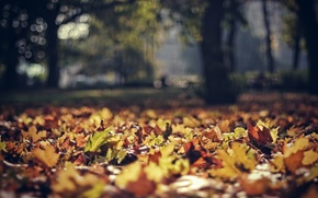 Картинка осень, листья, парк, листва, фокус, польша, боке, poland