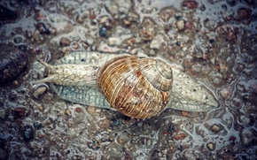 Картинка rain, grey, asphalt, snail