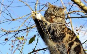 Обои кошка, на дереве, ветки, дерево, кот