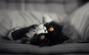 Картинка кошка, кот, мордочка, глаза. взгляд