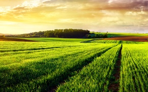 Картинка дорога, лето, деревья, поля, простор