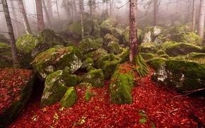 Картинка осень, лес, природа, туман, камни
