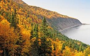 Обои осень, лес, деревья, берег