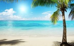 Картинка песок, море, вода, солнце, пальма, пальмы, океан, берег, пейзажи, пляжи