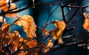 Картинка осень, лес, листья, макро, ветви