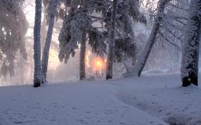 Обои зима, солнце, снег, деревья, природа, туман, фото