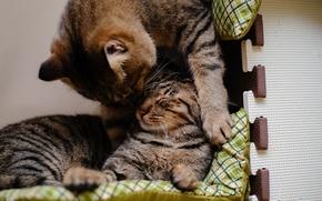 Обои играют, спят, коты, кошки