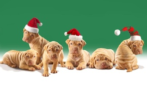 Картинка dogs, puppies, Christmas hats, shar pei