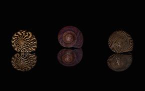 Картинка макро, отражение, узор, ракушки, раковины