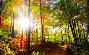 Картинка осень, лес, солнце, деревья, природа, фото, тропа, лучи света