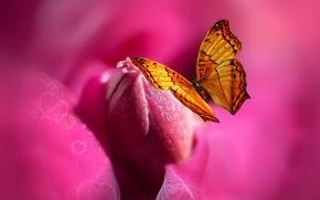 Картинка цветок, бабочка, краски, сердце, стилизация, Josep Sumalla