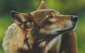 Картинка рисунок, волк, by shonechacko