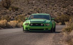 Картинка Mustang, Ford, Зеленый, Форд, Muscle, Мустанг, Мускул, Car, Green, RTR, Кар