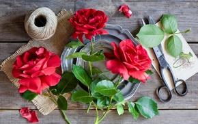 Картинка листья, розы, нитки, ножницы