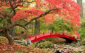 Картинка осень, мост, парк, bridge, park, autumn, японский сад, fall season