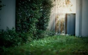 Картинка трава, свет, блики, дверь, двор, кусты, боке