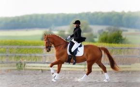 Картинка наездница, horse, конный спорт