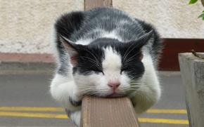Обои забор, отдых, сон, кот