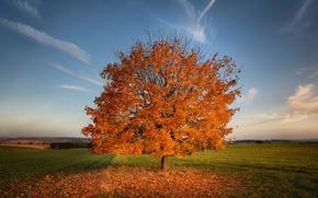 Картинка поле, осень, листья, дерево