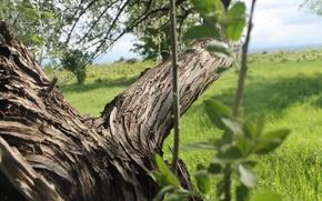 Картинка трава, природа, дерево