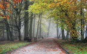 Картинка осень, скамейка, туман, парк, дорожка, Бельгия, аллея, trees, park, Autumn, fog