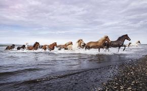 Картинка природа, река, кони