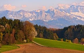 Картинка Деревья, Швейцария, Поле, Switzerland, Горы