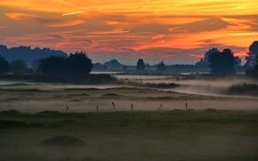 Картинка деревья, туман, Германия, зарево, болота, Шлезвиг-Гольштейн, долина Эльбы, Ведель