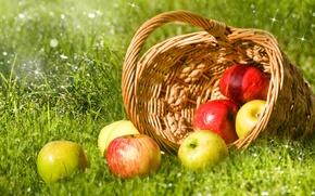 Обои трава, капли, роса, блики, корзина, яблоки, зеленые, красные, фрукты, боке