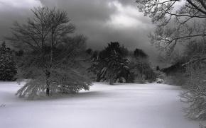 Обои снег, деревья, Зима