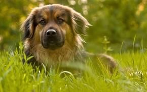 Картинка зелень, пёс, боке