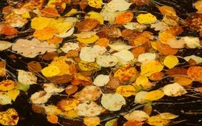 Картинка осень, листья, лист, ручей, widescreen, обои, поток, wallpaper, широкоформатные, background, обои на рабочий стол, полноэкранные, ...