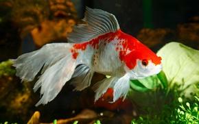 Подводный мир рыбы косяк стая обои
