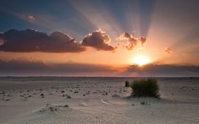 Картинка небо, солнце, облака, закат, оранжевый, синий, пустыня, куст, desert, sunset, clouds, sand, sunlight, bush, sun …