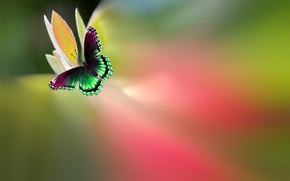 Картинка цветок, бабочка, краски, красивая, яркая, пестрая, Josep Sumalla