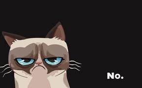 Картинка кот, злой, cat, grumpy